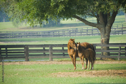 Beautiful horse mare and foal in green farm field pasture equine industry