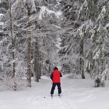Narciarz Biegowy W Zimowym Lesie