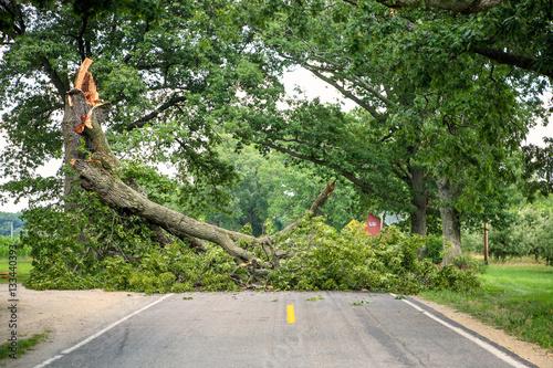 Fotografie, Obraz  Tree fallen across a road