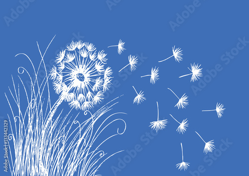 Photo  Dandelions ,Sketch