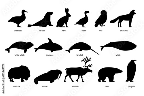 Fotomural  Collection of silhouettes of Arctic Animals