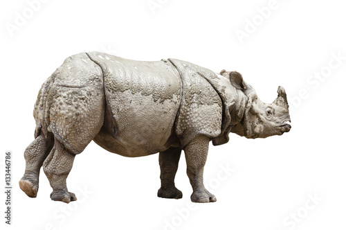 Fototapeta premium Indian rhinoceros (Rhinoceros unicornis)- isolated