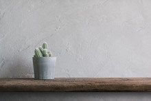 Cactus Flower On Wood Wall She...