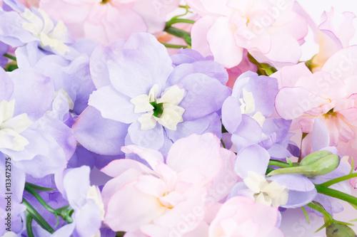 Foto op Canvas Bloemen Flowers