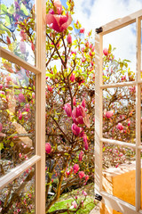 FototapetaLooking through an open window onto blooming magnolia tree with pink flowers.
