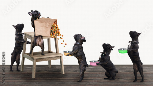 Funny dogs stand in line for food with bowls in their paws Wallpaper Mural