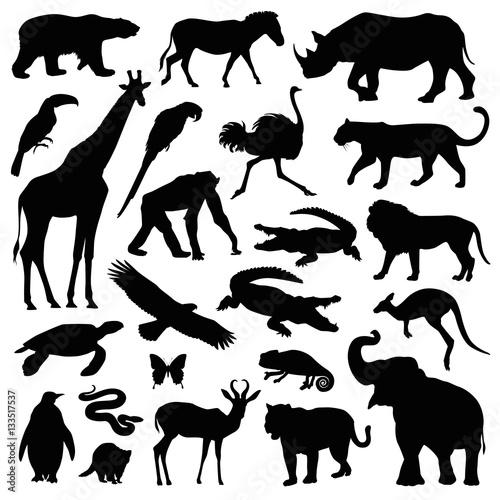 zoo animal illustration set Canvas Print