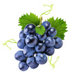 canvas print picture - grapes isolated on the white