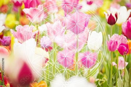 Photo  Blume des Lebens als Esoterik Symbol