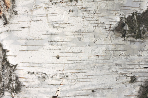 Fotografija birch bark texture natural background paper close-up