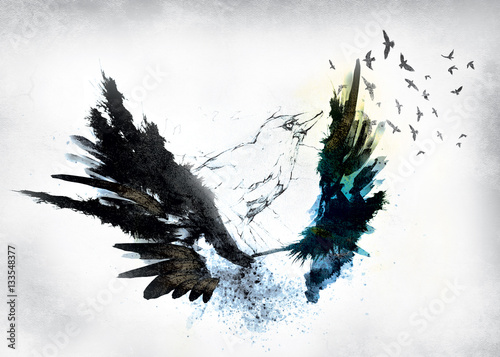 Poster Aigle crow,