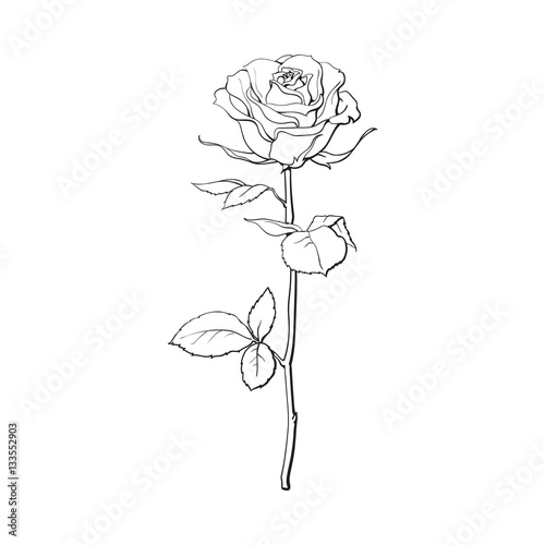 Flower Drawing App: Deep Contour Rose Flower With Green Leaves, Sketch Style