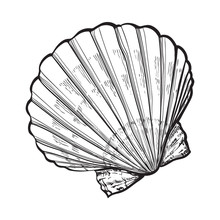 Scallop Sea Shell, Sketch Style Vector Illustration Isolated On White Background. Realistic Hand Drawing Of Saltwater Scallop Seashell, Clam, Conch