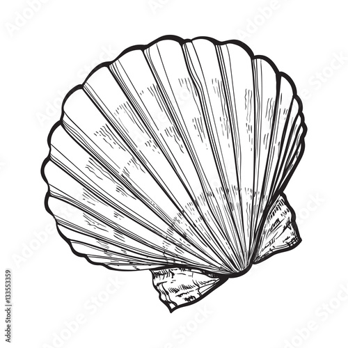 Stampa su Tela scallop sea shell, sketch style vector illustration isolated on white background