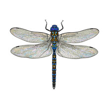 Top View Of Blue Dragonfly Wit...