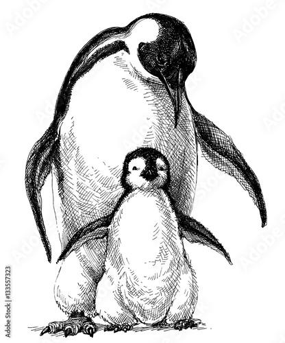 Rodzina pingwinów. Śliczny dziecko pingwin i rodzica rysunek odizolowywający