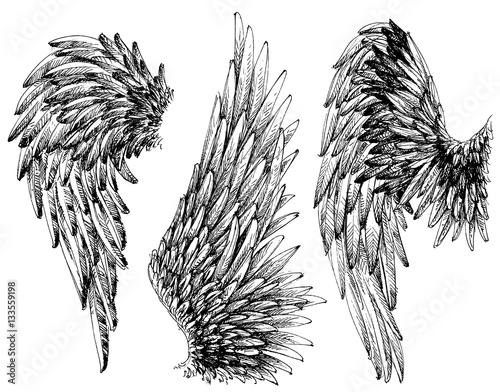 Foto  Wings set. Hand drawn detailed wings collection
