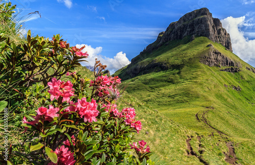 rhododendron flowers in Dolomites - Val di Fassa, Italy Wallpaper Mural