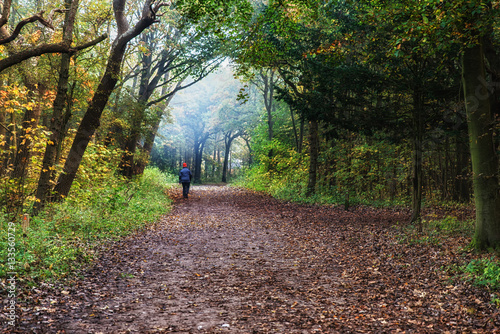 Foto op Canvas Weg in bos Walking Through an Autumn Forest