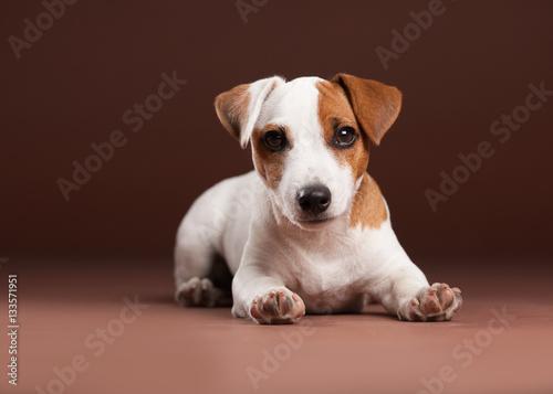 Fotografie, Obraz  Puppy