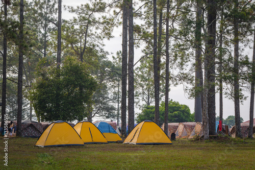 Poster Camping Landscape of Phukradung national park of Thailand