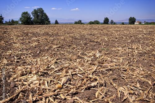 Valokuva  Corn Field