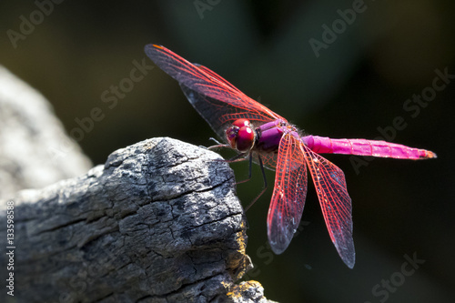 Image of dragonfly perched on a tree branch on nature background