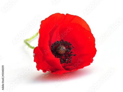 Foto op Canvas Poppy Red poppy flower isolated on white background