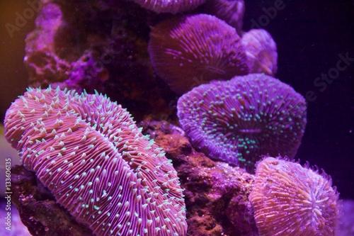 Staande foto Koraalriffen coral