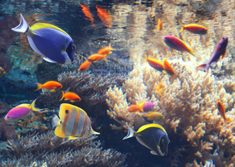 Fototapeta na wymiar Underwater scene with tropical fish