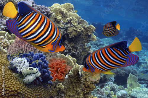 Poster Sous-marin underwater image of coral reef and tropical fishes