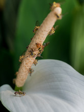 Honeybees Polinating To White ...