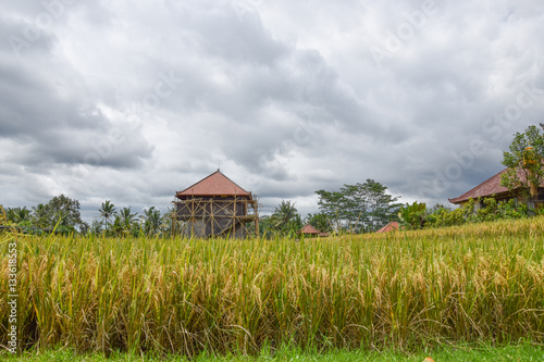 Foto auf Gartenposter Reisfelder Rice field with beautiful sky. Bali, Indonesia.