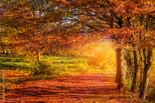 Colorful autumn landscape. wonderful picturesque view. tree with red foliage on the road in the wonderland forest. creative artistic image - 133618567