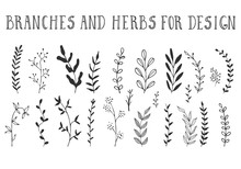 Branches And Herbs With Leaves