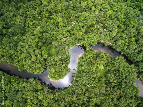 Photo Top View of Amazon Rainforest, Brazil