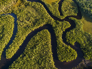 Obraz na Plexi Top View of Amazon Rainforest, Brazil