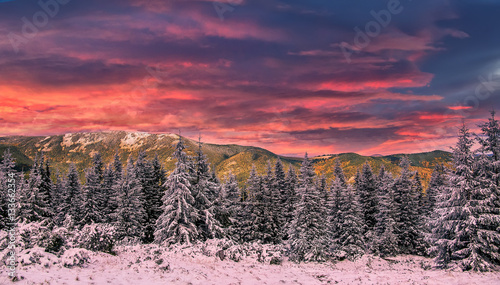Foto op Plexiglas Crimson fantastic sunset in the mountains landscape. colorful overcast clouds over the snow covered pines . majestic frosty morning. artistic creative image. Beauty world.