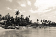 Palmen und Strand, Arugam Bay, Sri Lanka, schwarz weiß
