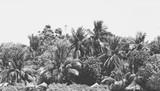 Czarno-białe tło krajobrazu - 133680968