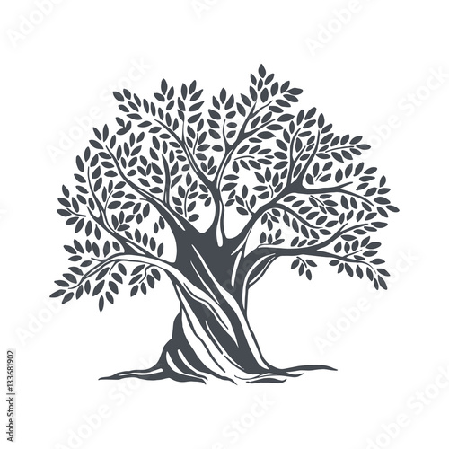 Fototapeta Hand drawn olive tree. Vector sketch illustration
