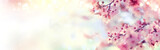 Fototapeta Kwiaty - Spring border or background art with pink blossom. Beautiful nature scene with blooming tree and sun flare