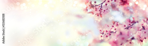 Photographie Spring border or background art with pink blossom