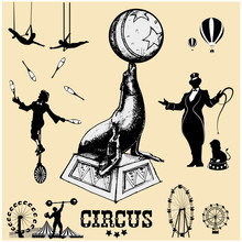 Circus And Amusement Park Vector Illustrations. Circus Seal