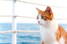 Cute Red Cat Looking Torward T...