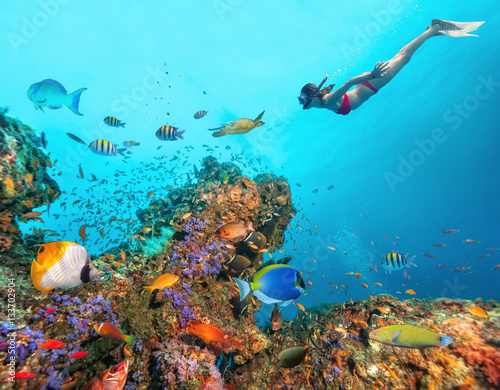 Photo Stands Diving Beautiful coral reef with young freediver woman