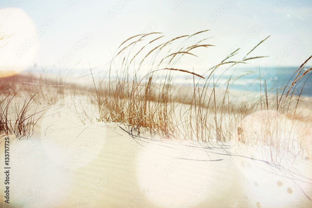 Fototapety, obrazy: Beach Grass Blowing in the Wind