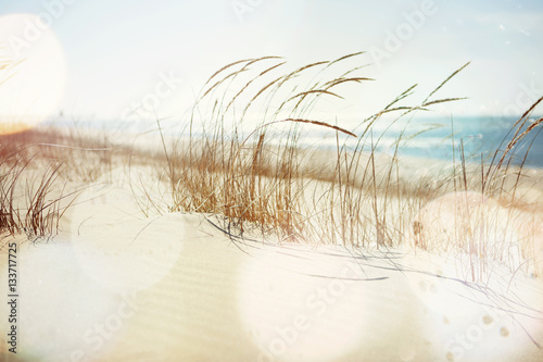 Photo sur Toile Herbe Beach Grass Blowing in the Wind