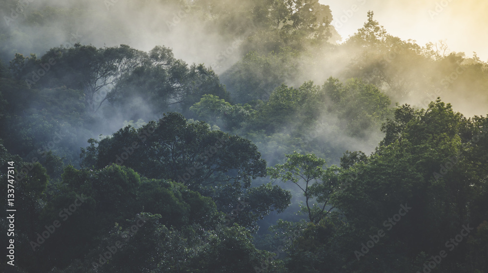 Fototapety, obrazy: Landscape of Tropical rain forest, Asia