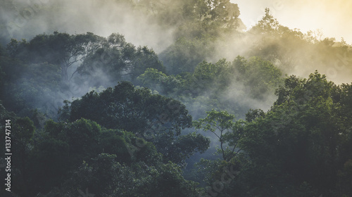 Tuinposter Jungle Landscape of Tropical rain forest, Asia